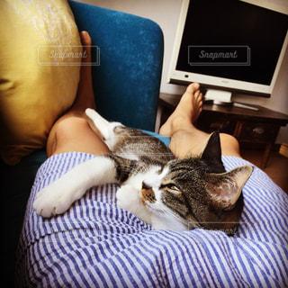 猫の写真・画像素材[237384]