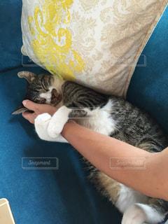猫が好きの写真・画像素材[237385]