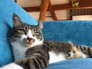 猫が好きの写真・画像素材[237388]
