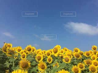 風景の写真・画像素材[648549]