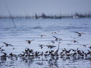 干潟と鳥たちの写真・画像素材[751481]