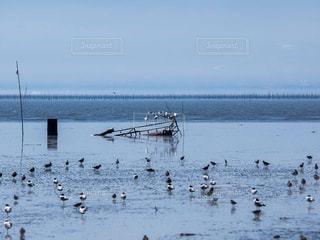 干潟の鳥 クロツラヘラサギの写真・画像素材[1036212]