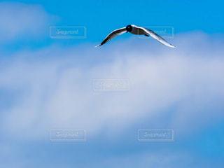 空を飛んでいる鳥の写真・画像素材[1036214]