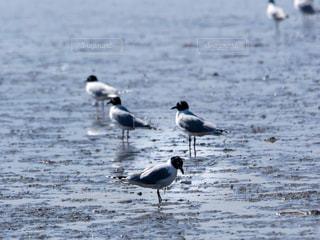 干潟の鳥の写真・画像素材[1036218]