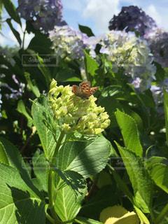 花のクローズアップの写真・画像素材[2223892]