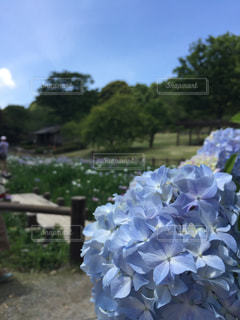 花園のクローズアップの写真・画像素材[2223893]