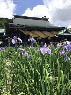紫色の花の群の写真・画像素材[2223910]