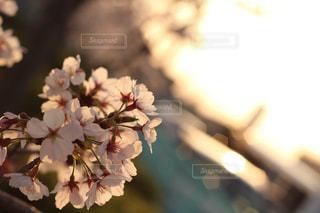 風景の写真・画像素材[237687]