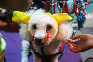 犬の写真・画像素材[263802]