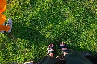 草の中に立っているの写真・画像素材[720714]