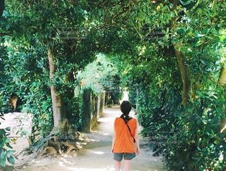 木の中を歩くの写真・画像素材[1503332]