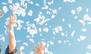 空中に飛び上がる花びらの写真・画像素材[2809006]