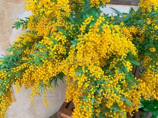 黄色い花の写真・画像素材[3052947]