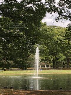 水の体の横にあるツリーの写真・画像素材[766778]