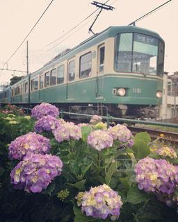 フラワー ガーデンに列車を引っ張るの写真・画像素材[1359197]