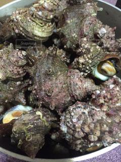 貝の写真・画像素材[237977]