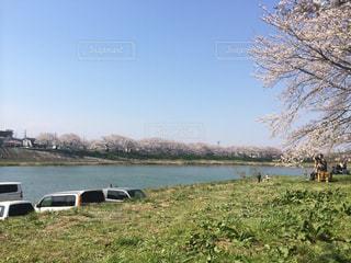 桜の写真・画像素材[238324]