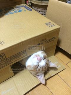 猫の写真・画像素材[238325]