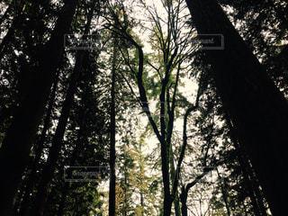 森林の写真・画像素材[258902]