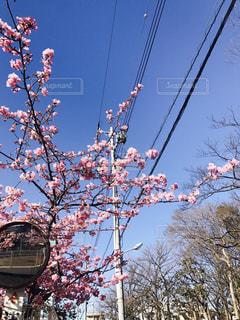 花の写真・画像素材[429193]