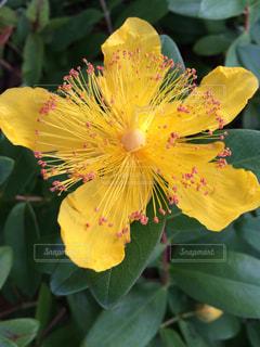 花の写真・画像素材[239723]