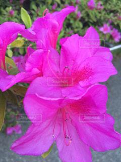 花の写真・画像素材[239770]