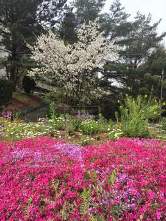 花の写真・画像素材[239784]