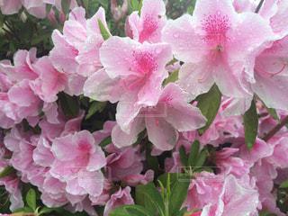 花の写真・画像素材[239790]