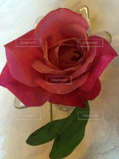 花の写真・画像素材[240829]