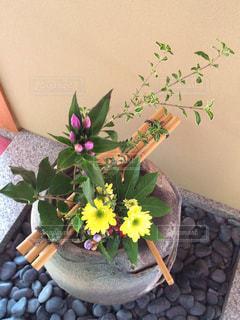 花の写真・画像素材[240872]