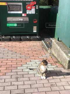 猫の写真・画像素材[275384]