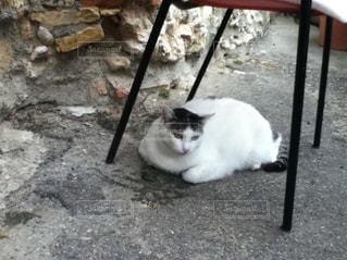 No.241978 猫