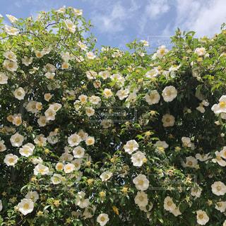 公園の花の写真・画像素材[1291287]