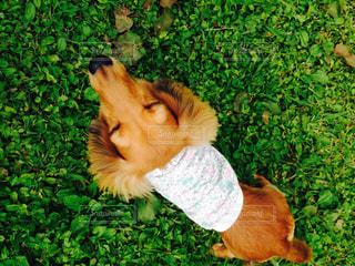 犬の写真・画像素材[239249]