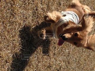 犬の写真・画像素材[241826]