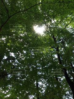 自然の写真・画像素材[241879]