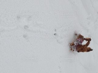犬の写真・画像素材[241939]