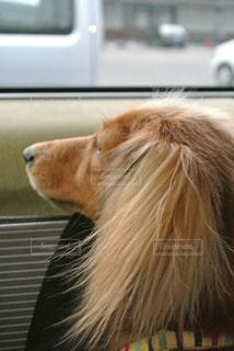 犬の写真・画像素材[242359]