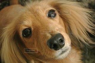 犬 - No.242360