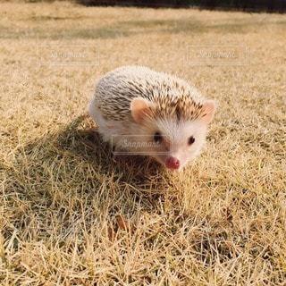 動物の写真・画像素材[42684]