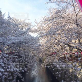 春の写真・画像素材[239398]