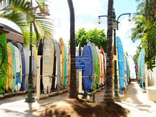 サーフィンの写真・画像素材[239450]