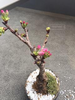 花の写真・画像素材[240429]