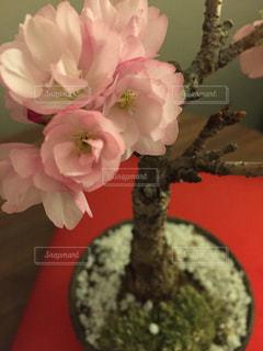 自然の写真・画像素材[240434]