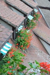花の写真・画像素材[6697]