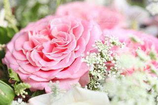花の写真・画像素材[6629]