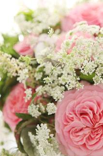花の写真・画像素材[6627]