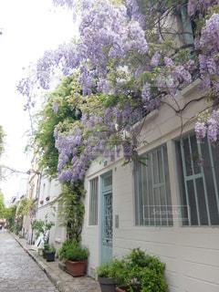 花の写真・画像素材[6596]
