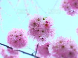 花の写真・画像素材[6569]