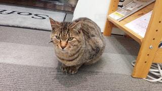 猫の写真・画像素材[241041]